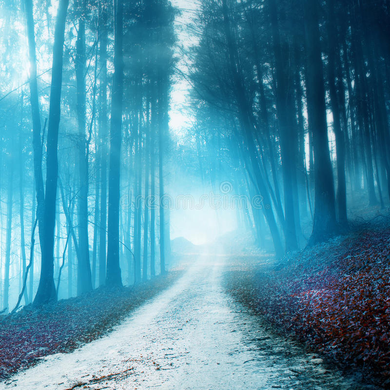 Mystical blurry forest road royalty free stock image
