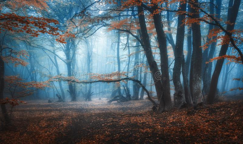 Mystical dark autumn forest with trail in blue fog stock photo