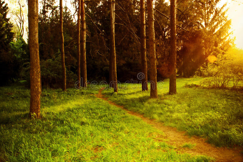 Mystical dense forest with footpath shimmering sunlight. stock photography