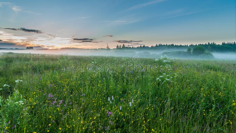 Mystical evening foggy landscape. the fog which is low creeping on a meadow. sunset. Summer royalty free stock photo