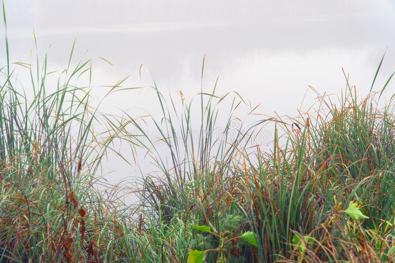 Mystical Fog in the early morning on lake. Mystical Fog in the early morning on a small lake royalty free stock photos