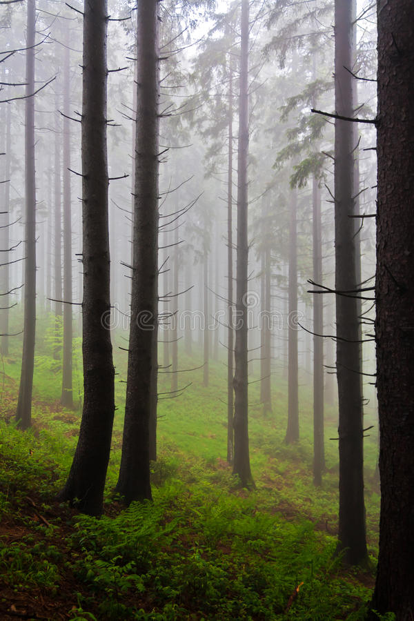 Mystical forest royalty free stock images