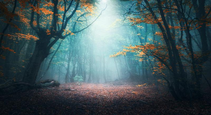 Mystical forest in blue fog in autumn. Colorful landscape royalty free stock photos