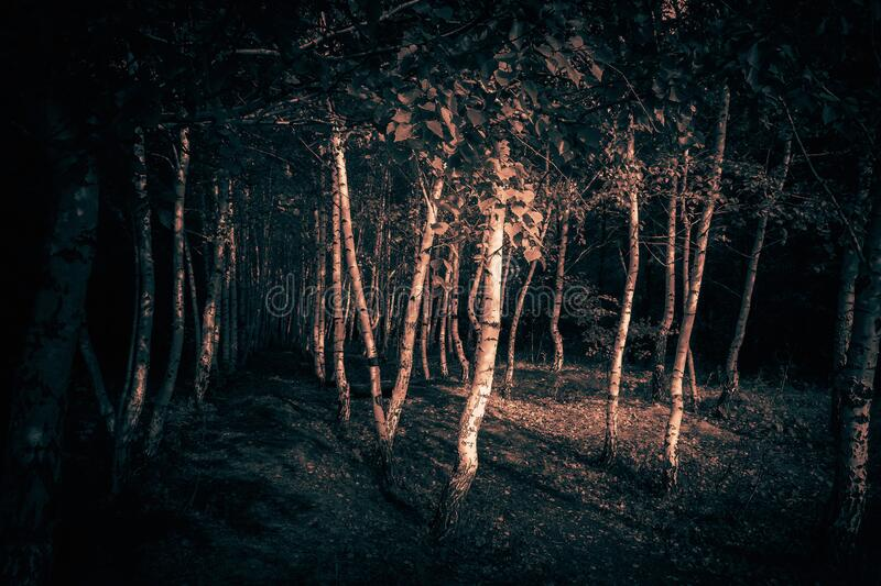Mystical horror scary abstract forest to halloween. Clumsy dirty trees in the darkness in a mysterious paranormal frightening. Surrealistic moonlight with black royalty free stock photos