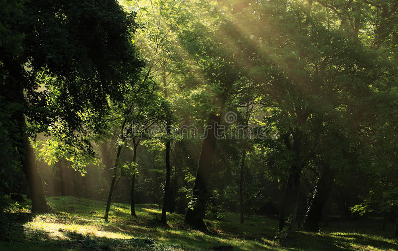 Mystical landscape royalty free stock images