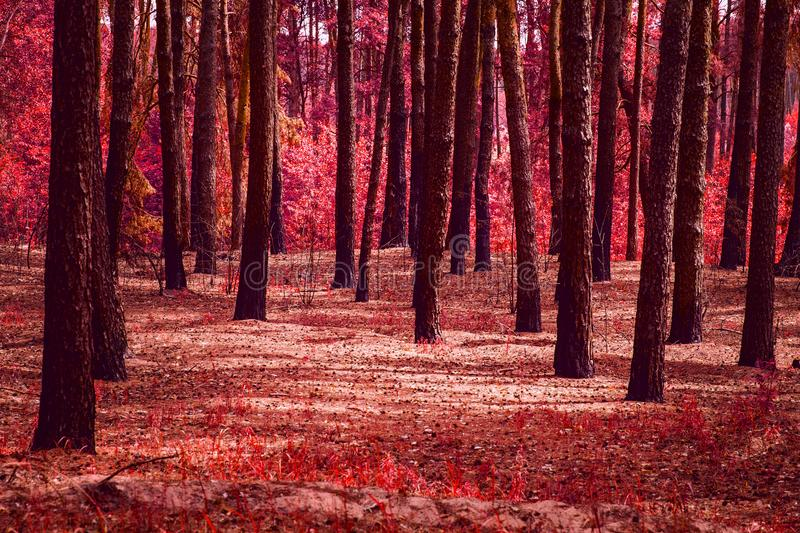 Mystical meadow in a fantastic forest no one around except the red autumn stock photo
