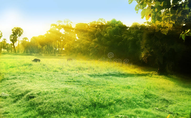 Mystical morning. With ray of light stock photography