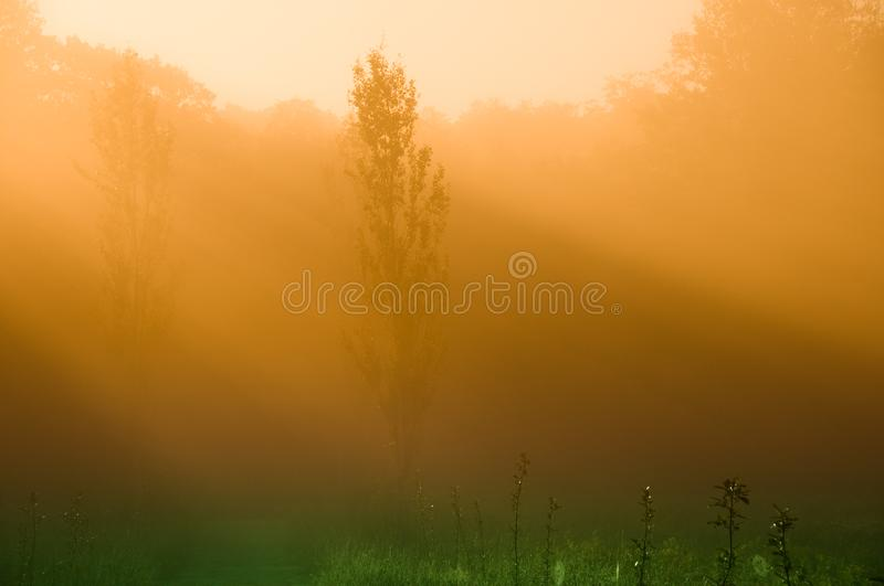 Download Mystical Morning stock image. Image of silhouette, orange - 6447585