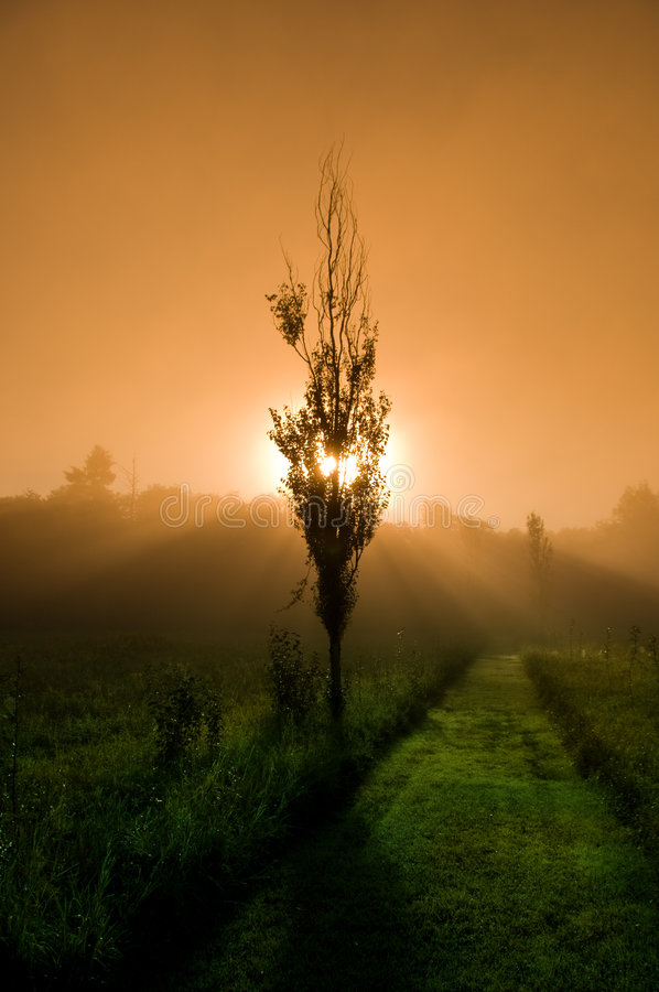 Mystical Morning stock images