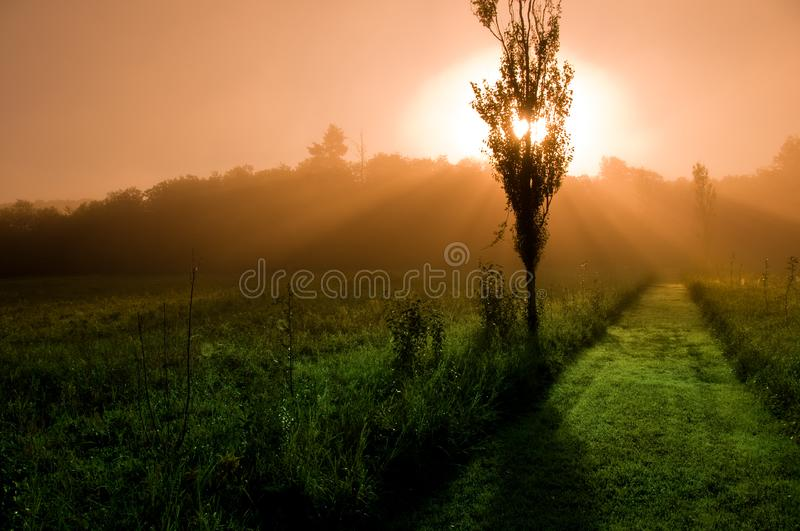 Mystical Morning royalty free stock images