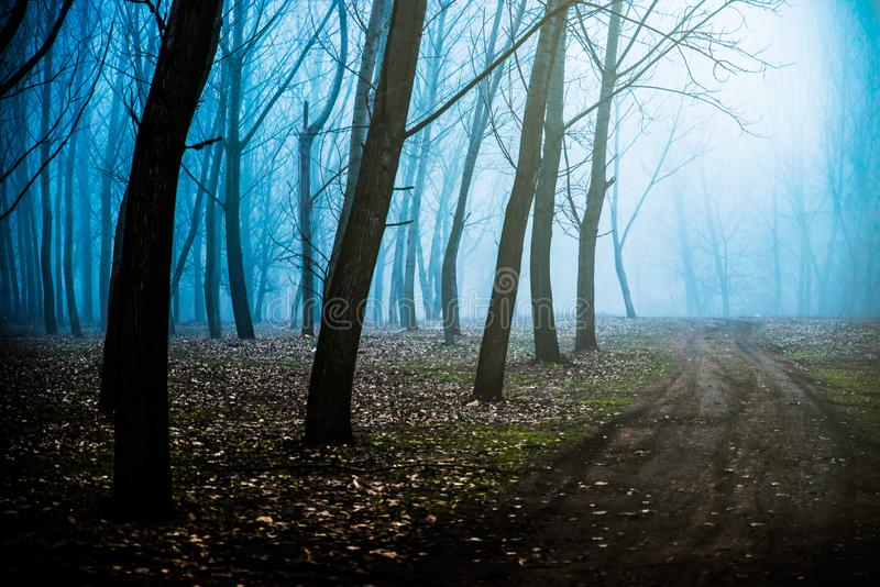 Mystical Morning with a fog. Mystical Morning in the forest with a fog stock photo