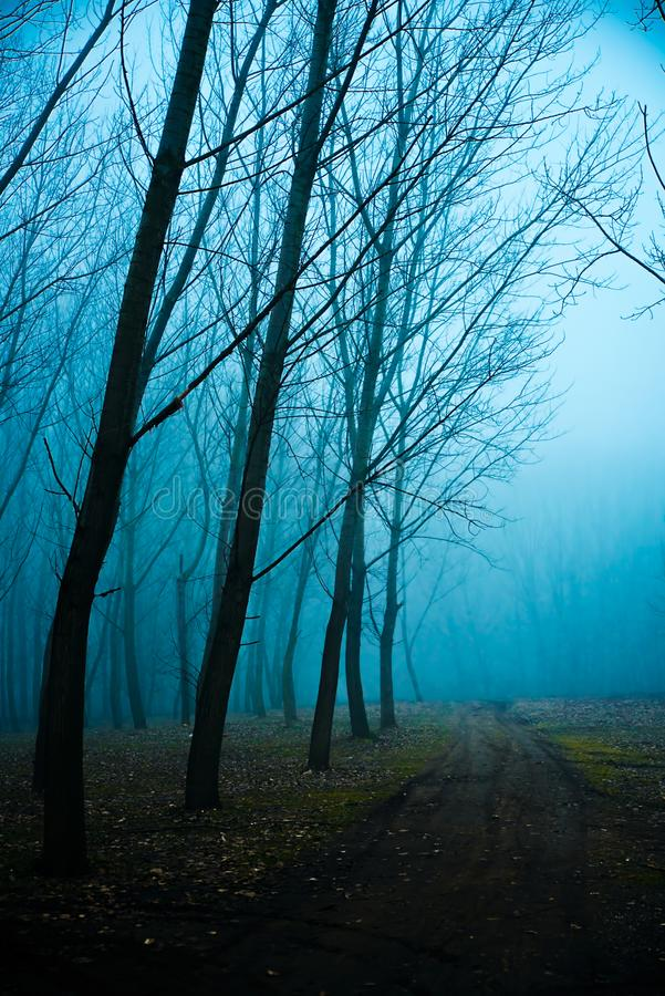 Mystical Morning with a fog. Mystical Morning in the forest with a fog stock images