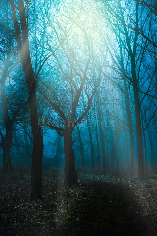 Mystical Morning with a fog. Mystical Morning in the forest with a fog stock image