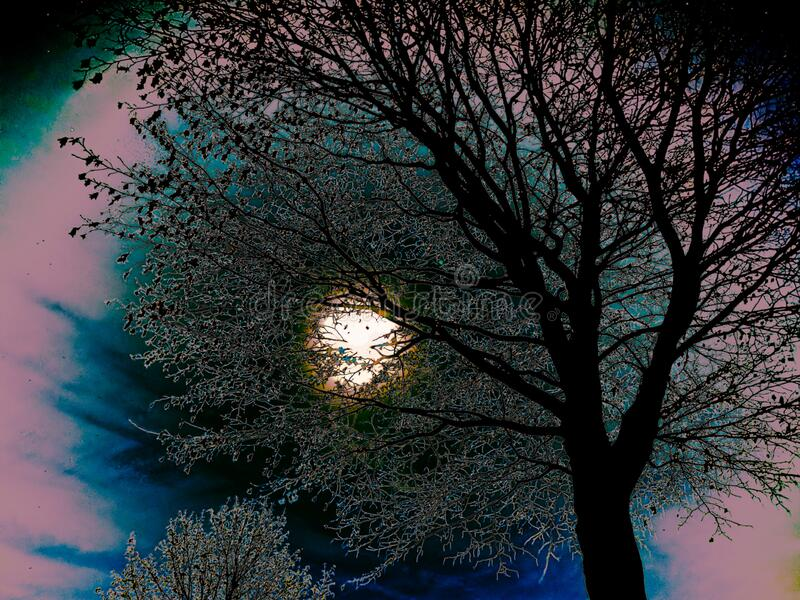 A mystical night with a full moon behind the silhouette of a bare tree stock image