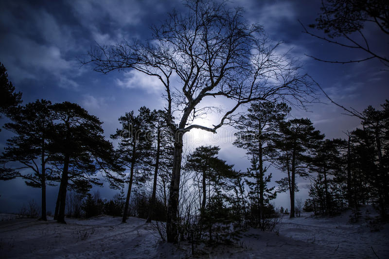 Mystical night landscape of winter forest with terrible tree at the centre. Moonlight, time. royalty free stock photo