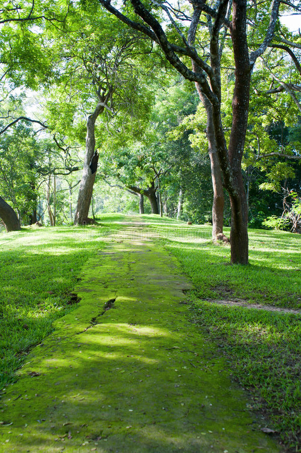 Download Mystical Path In Tropical Forest Stock Image - Image of environment, footpath: 23064419