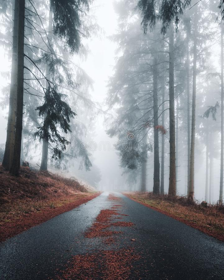 Mystical road with fir needles in a foggy and dark forest. Creepy natural background. Suitable for Horror, Halloween. royalty free stock images