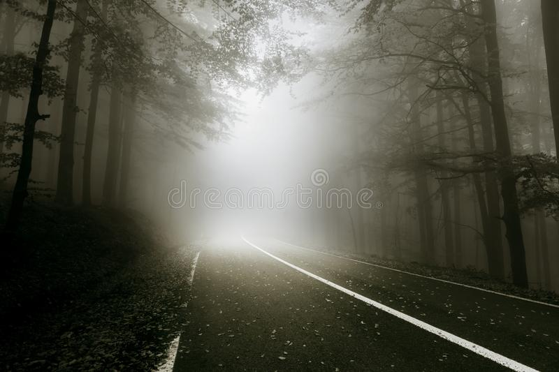 Mystical road through the forest royalty free stock images