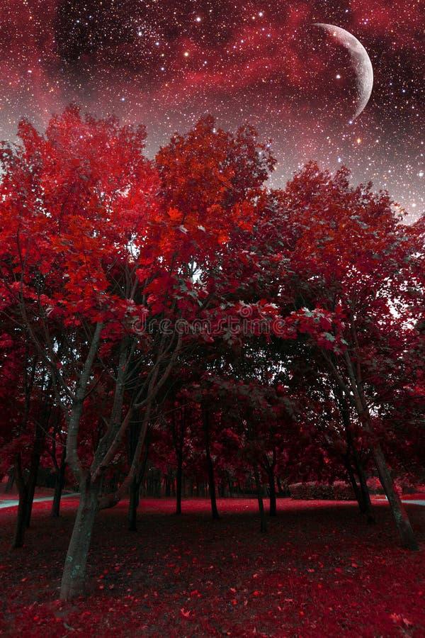 Mystical spring night. royalty free stock photos