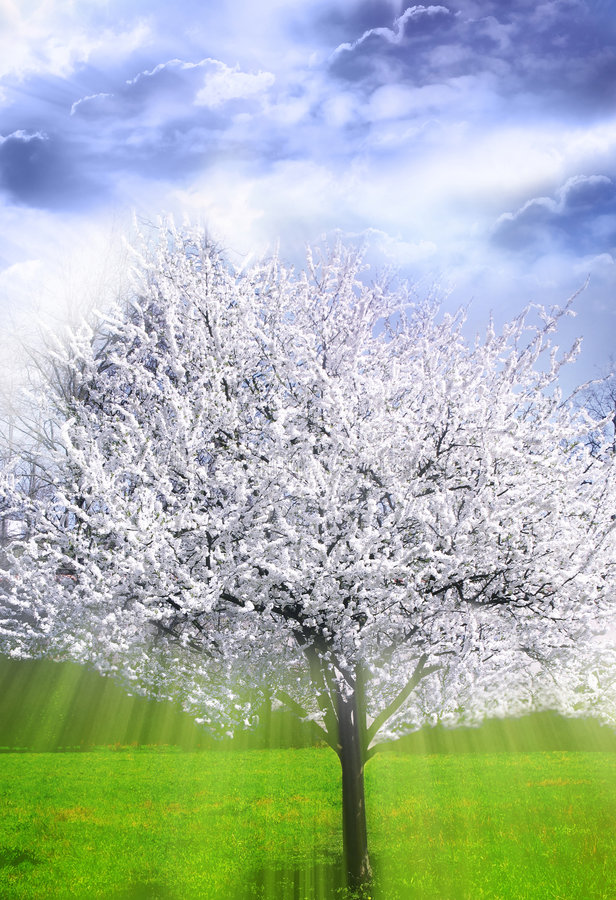 Mystical spring tree royalty free stock images