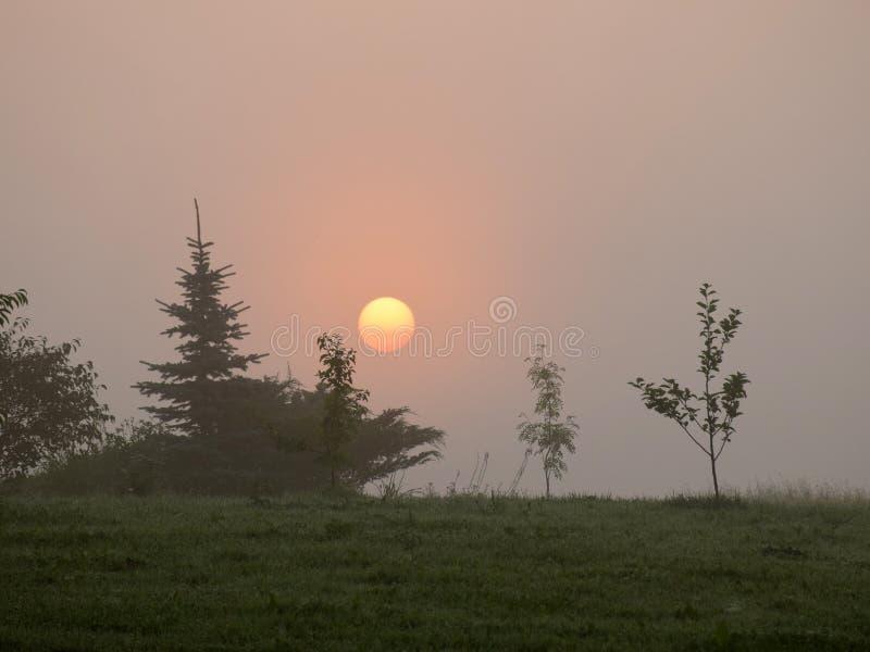 Mystical sun in the morning light stock photo