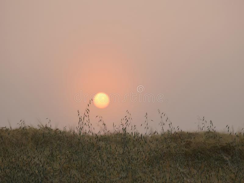 Mystical sun in the morning light. Meadow, Latvia royalty free stock photo