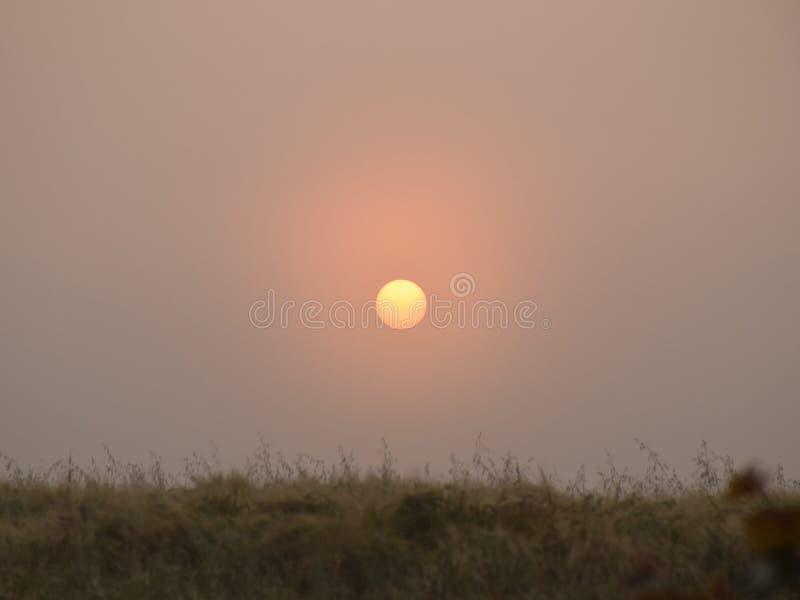 Mystical sun in the morning light. Meadow, Latvia royalty free stock photos