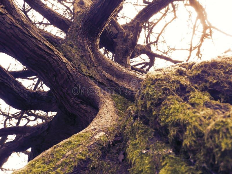 Mystical Tree stock photos