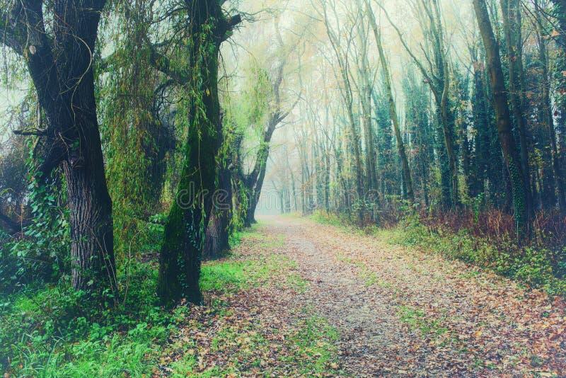 Mysticus mistig bos met een weg royalty-vrije stock afbeelding