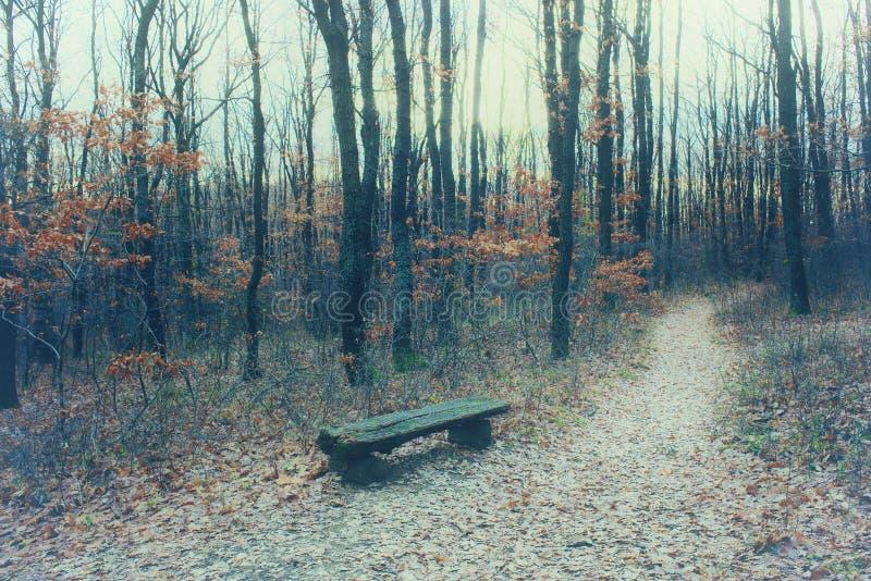 Mysticusbos met weg, naakte bomen en gevallen bladeren stock afbeeldingen