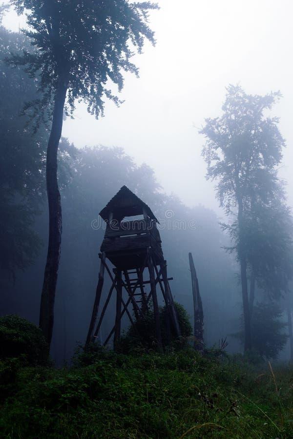 Mystiek bos stock afbeeldingen