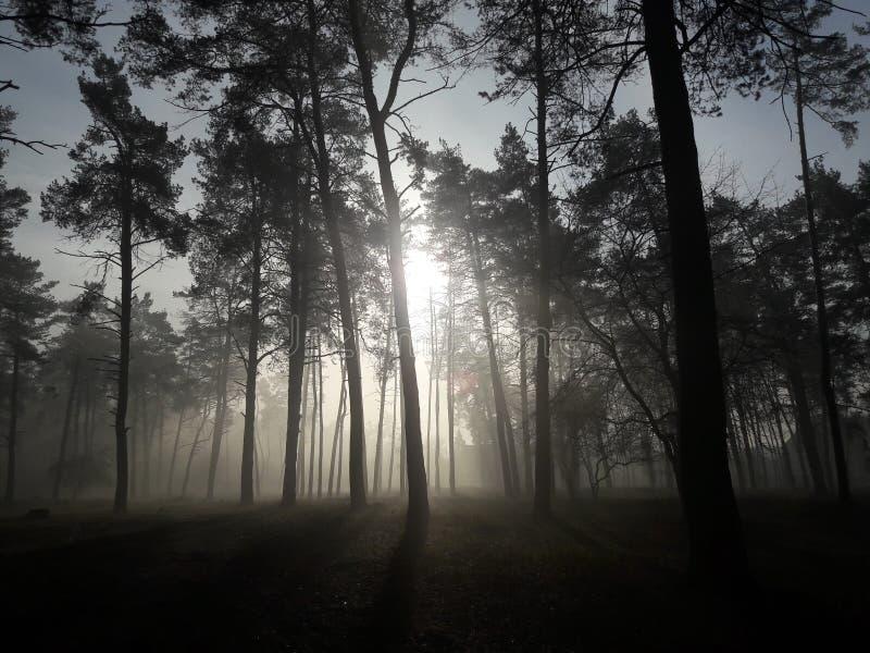 Mystiek bos in de mist stock afbeeldingen