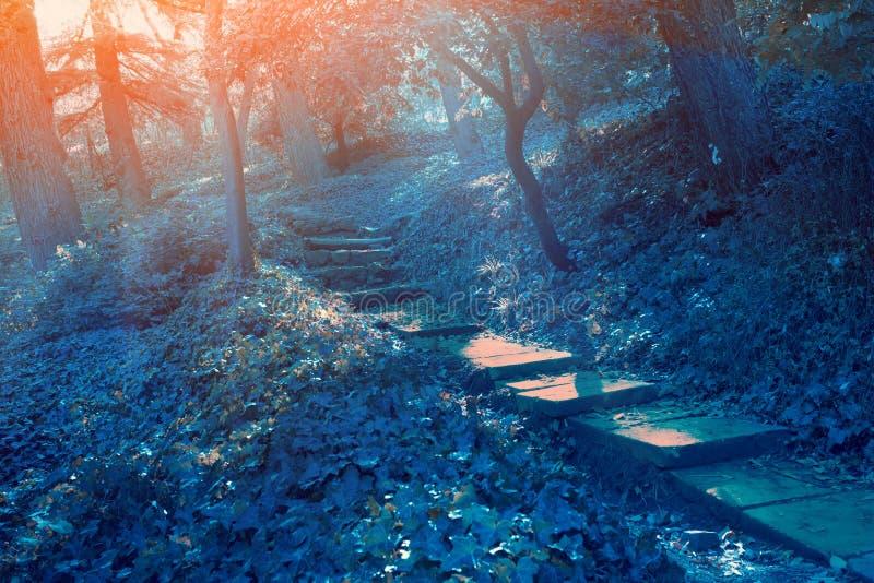 Mystiek bos in de nacht royalty-vrije stock afbeelding
