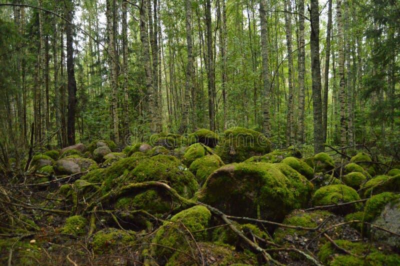 Mystiek bos met mos-gekweekte rotsen stock fotografie