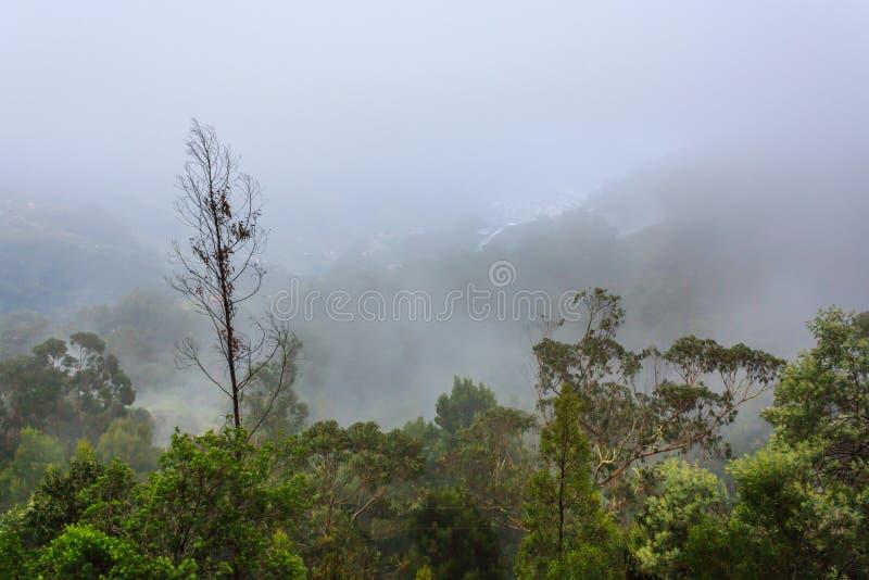 Mystiek bos in mist stock foto