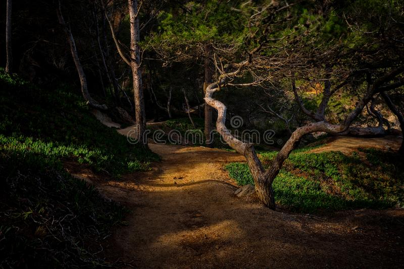Mystiek bosdetail met aardig zonlicht stock afbeelding