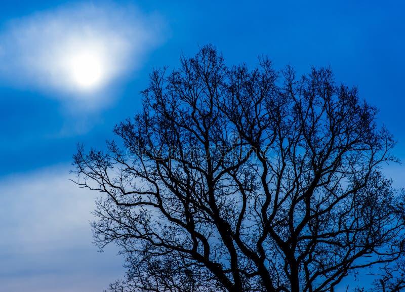 Mystieke boom bij nacht stock afbeeldingen