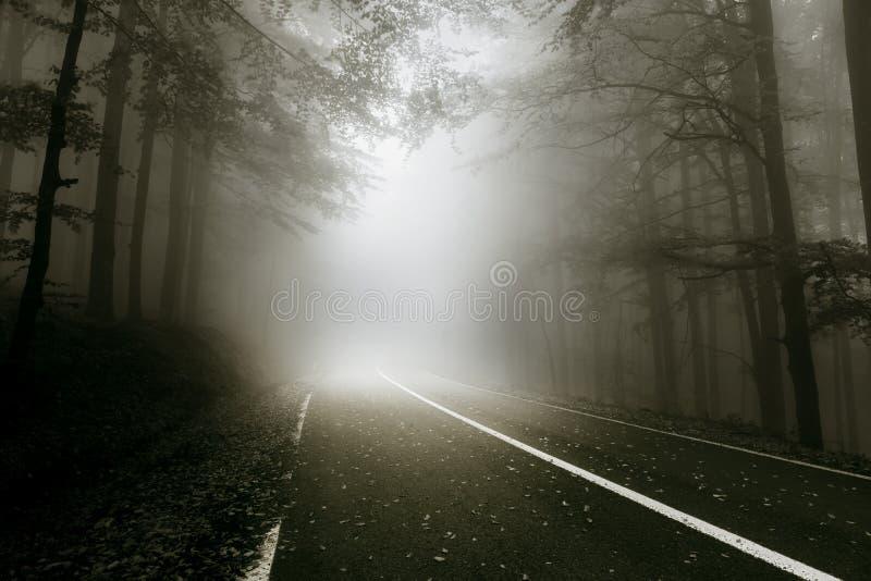 Mystieke weg door het bos royalty-vrije stock afbeeldingen