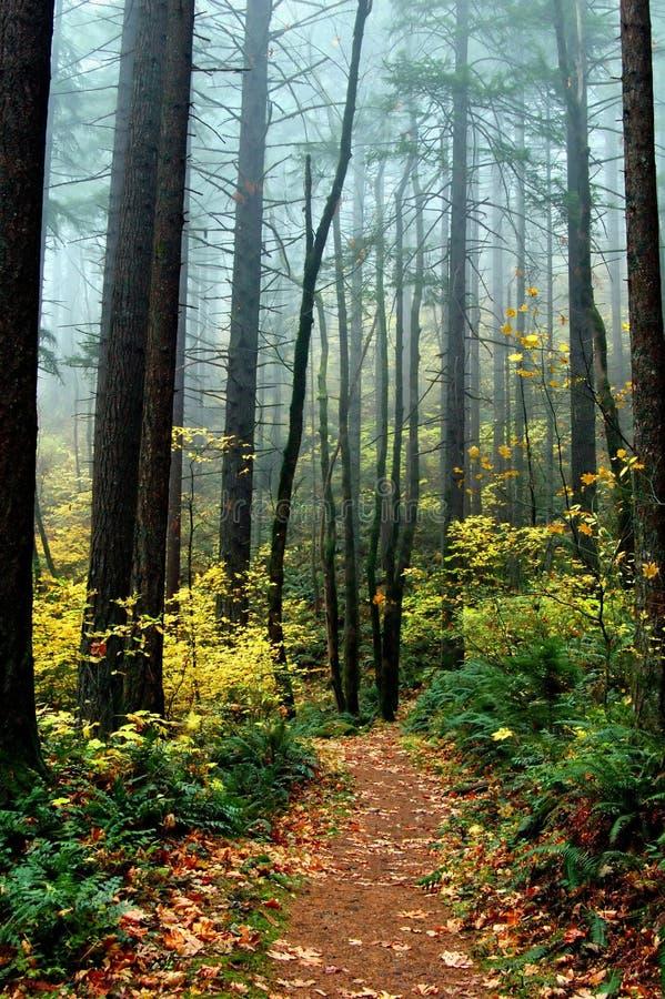 Mystieke Weg met het Gebladerte van de Herfst stock afbeelding