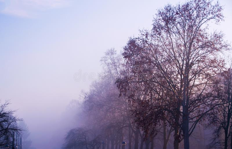 Mystified branches. Sunday morning`s mist captured in Zagreb, Croatia. Beautiful purple tones are giving out the coolish atmosphere of this fine winter morning royalty free stock image