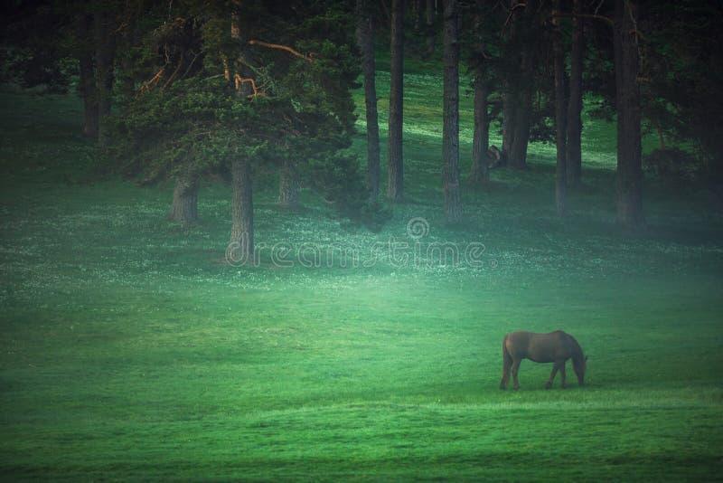 Mystikersoluppgång över berget Vildhäst som betar i mjödet fotografering för bildbyråer