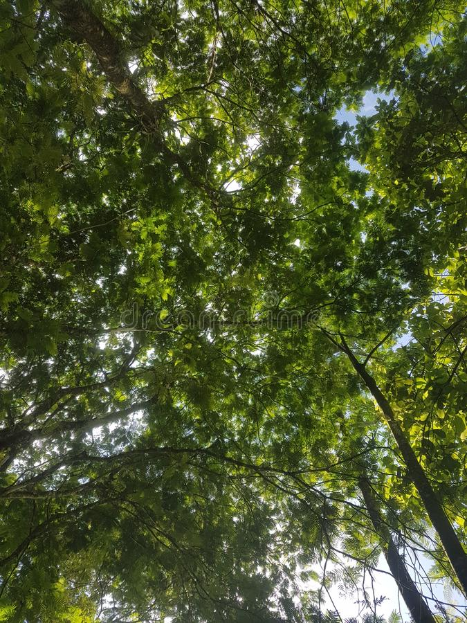 Mystique naturelle du Costa Rica 506 de nature image libre de droits