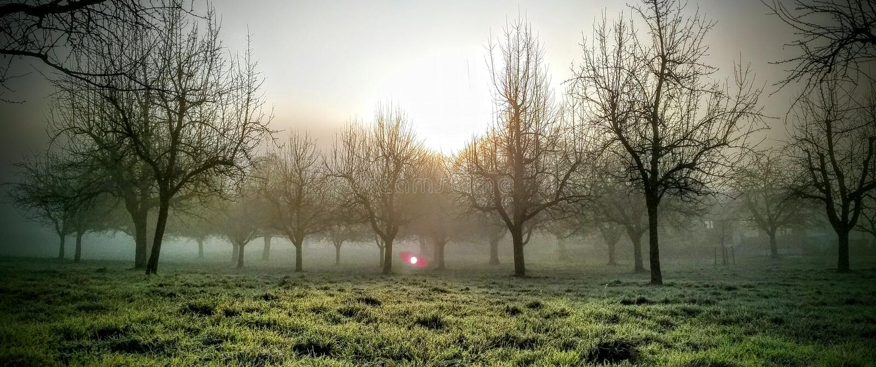 Mystische Bäume lizenzfreie stockbilder