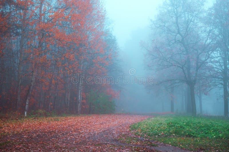 Mystische Herbstlandschaft mit Nebel im Park lizenzfreies stockfoto