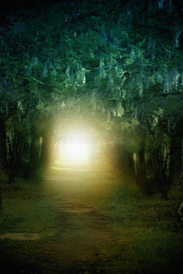 Mystische Landschaft stockfotos