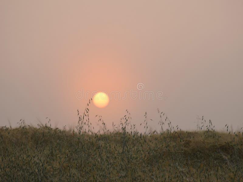 Mystische Sonne morgens hell lizenzfreies stockfoto