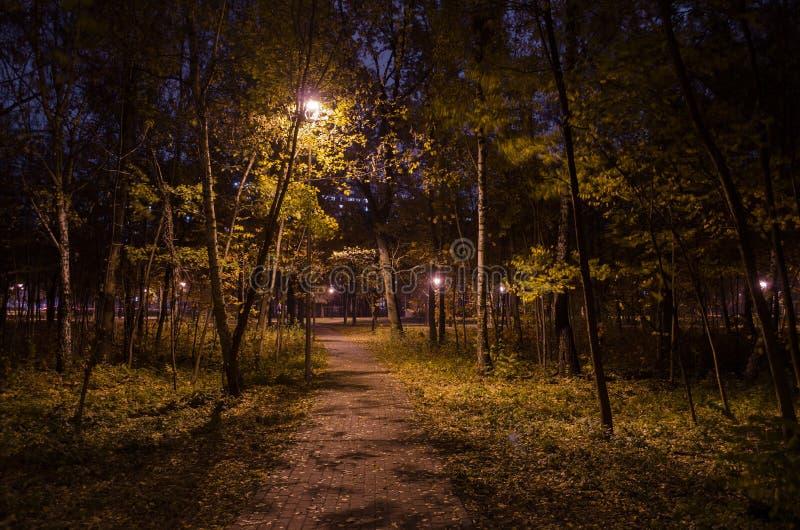 Mystische Spur im Nachtwald im Park mit glühenden Laternen Landschaft des Nachtparks im Herbst lizenzfreie stockbilder