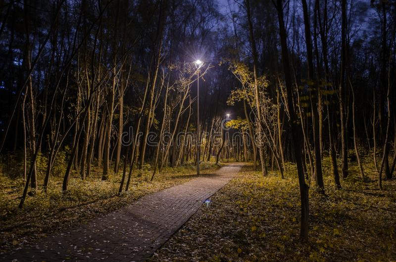 Mystische Spur im Nachtwald im Park mit glühenden Laternen Landschaft des Nachtparks im Herbst stockfotos