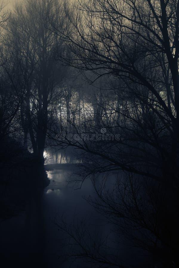 Mystische Szene des weichen Stromes und der Schattenbilder der kahler Bäume auf einer Winternacht lizenzfreies stockfoto