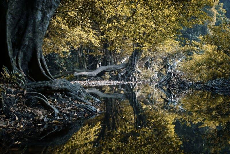 Mystische und schöne Waldszene lizenzfreies stockfoto